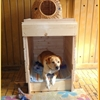 Turn Sniglar diaper-changing table into a doghouse