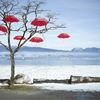 stillwater67:  red umbrellas …they grow on trees here in...