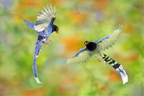 Dancing in Love by Sue Hsu