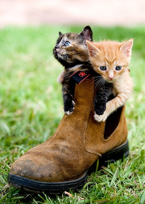 You know, with all the craziness these days, sometimes it's nice to just sit back and look at these cats in little boots. Awsome