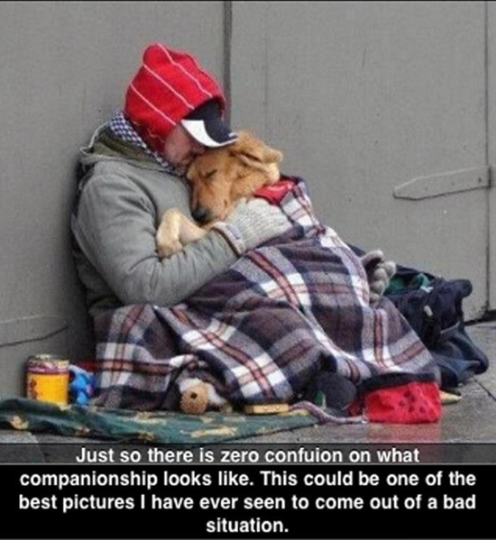 This dog has no idea he is homeless!