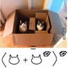 Let's learn Cath! #9gag