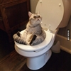 Hey get out, I'm pooping! #9gag