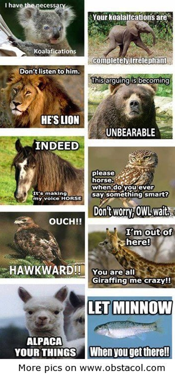 he's lion is the best one lol