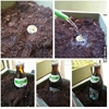 How to grow a beer