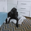 Baby steals bed from dog seven times her size because babies don't know what limitations are.