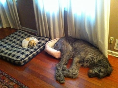 DIY dog beds!