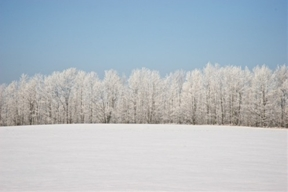"""""""I wonder if the snow loves the trees and fields, that it kisses..."""