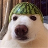 But there's a watermeloooaan on my head! #9gag @awwclub