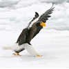 The Flasher by Harry  Eggens