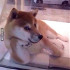 Draw me like one of your French doges. #9gag