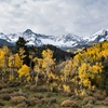 Wild Autumn AspenThis little group of aspen seem a bit wilder...