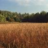 Autumnal FieldsMamiya RZ67 - Kodak Portra 400 by Patrick...