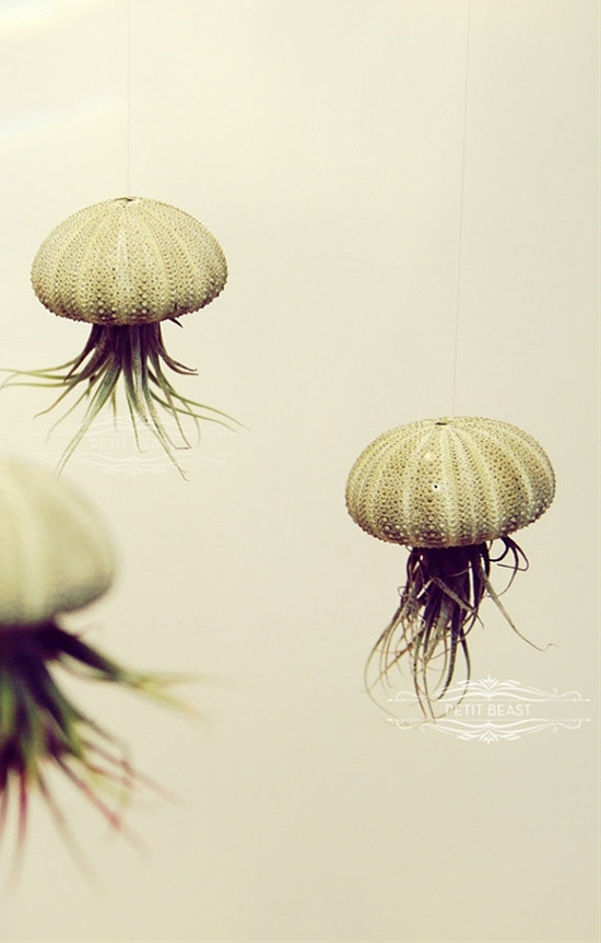 Jellyfish Air Plants // Sea Urchins Hanging Art