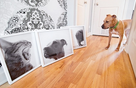 Blowing up pet portraits as art