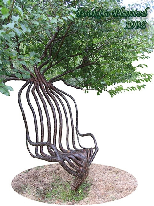 Check this out - a live tree gradually shaped into this!