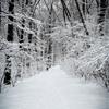 TianaNoujaimPhotography:Snow Fall (Part XII)Connecticut, USA©...