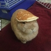 This bunny likes balancing stuff on his head. #9gag