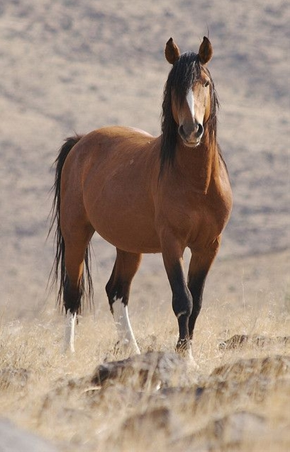 love this pic. I don't know why but this reminds me of my dads old horse that we used to have, but this horse looks nothing like ours except for the mane and tail.
