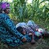 Somali refugees find a farming oasis