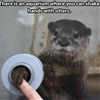 Otters are awesome! #9gag #awwclub
