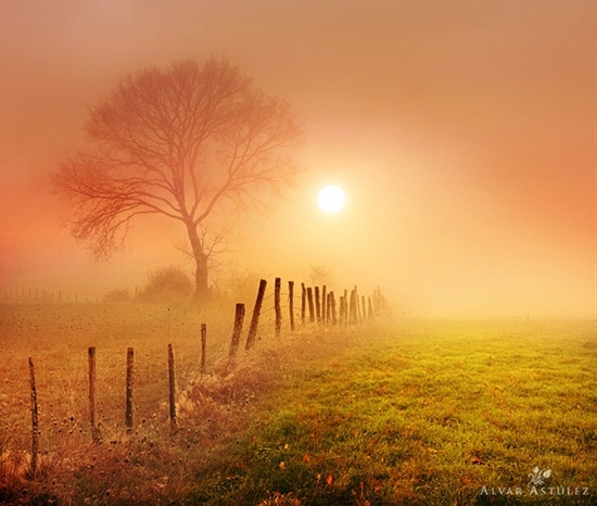 Golden fog
