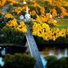 Quintessential New England Town.Deerfield, Massachusetts by...