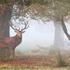 Autumn has arrived by Sirli Raitma (sirliraitma.tumblr.com)