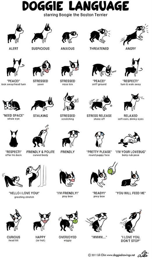 Doggie Language poster made me smile!