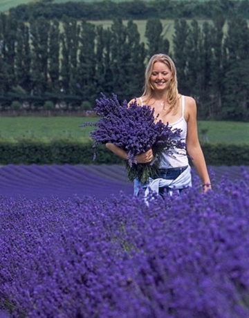 I want to stand in a fleld of lavender