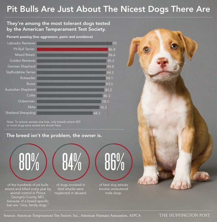Most pit bulls would rather babysit the kids than be forced to fight, which is just one reason breed-specific legislation is a cruel waste of resources.