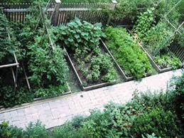 vegetable garden layout, from Skippy's Vegetable Garden