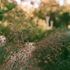 evening in the garden…olympus om-235mm film by...