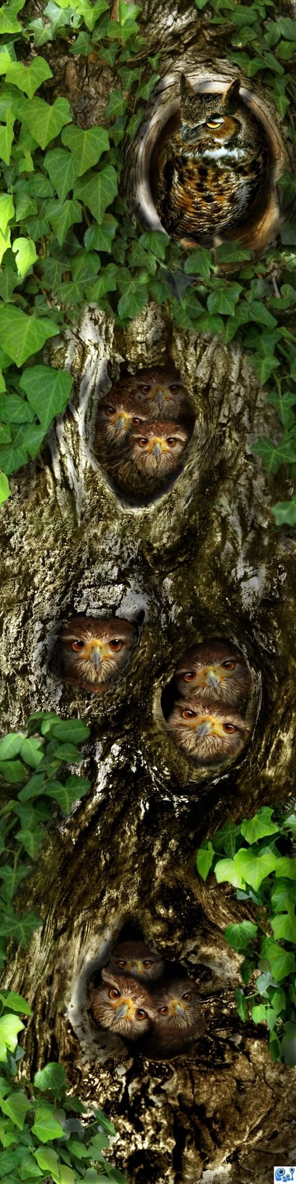 Knotty H'eye' Rise - created by artgirl1935-(Now this is photoshopped, but it makes such a cute picture, I decided people might enjoy it)