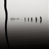 Pêche d'étang - Fishing in pond by Ronan Joncour...