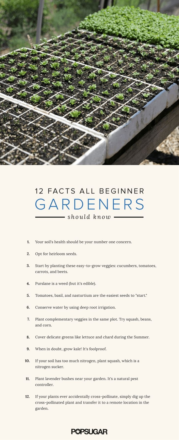 With these 12 tips and tricks, you'll be growing the greenery atop your sandwich and salads in no time.