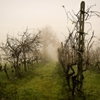 Aldiqua' della nebbia by Simone Fiorani...