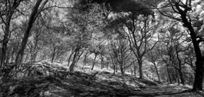 Past: Realityinfrared stitched panoramic thing… by philopenshaw ...