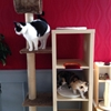 Cat playground and scratch post
