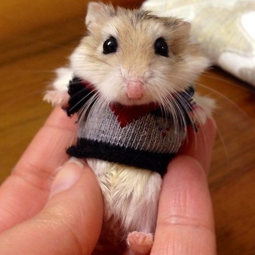You know if I had mice, they would be in sweaters.  I cant even handle the cuteness