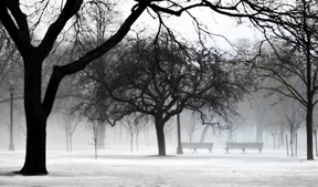 Trinity Bellwoods Park Toronto. Winter Fog by Tim McEown ...