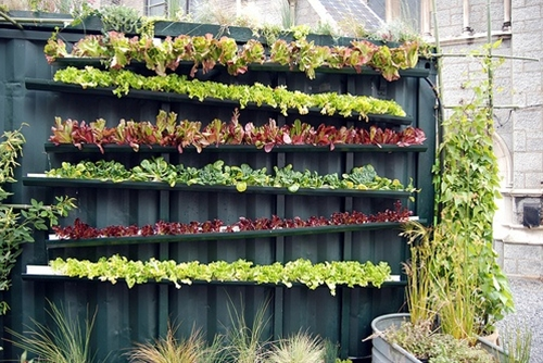 Gutter gardening. Gutters are angled to drain water to the lower tier.